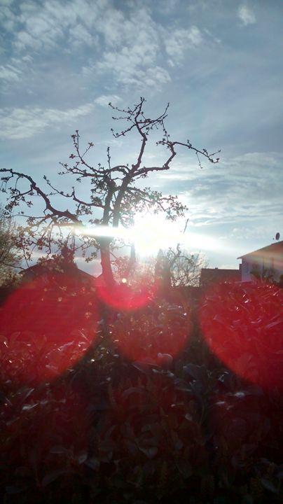 true nature reflection - Cicaya