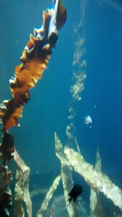 underwater bubbles matrix - Cicaya