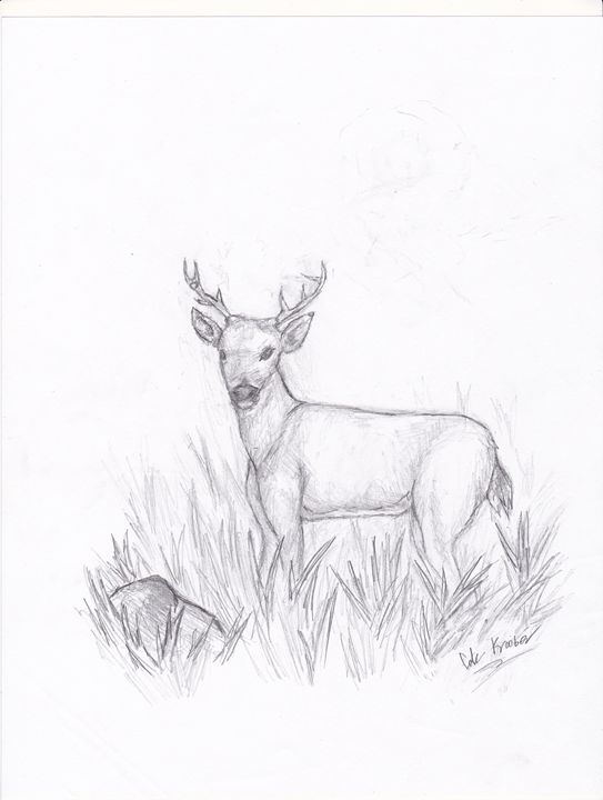 sketch of deer in tall grass - Cole K.