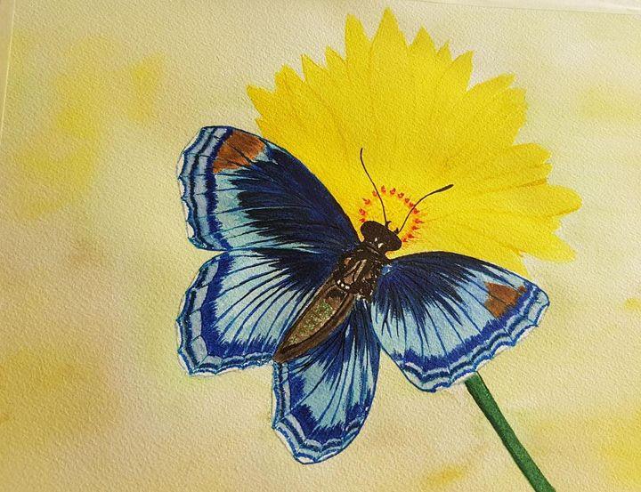 Blue Butterly - Shankar Kashyap