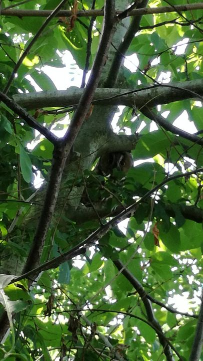 Find the owl - Love of nature