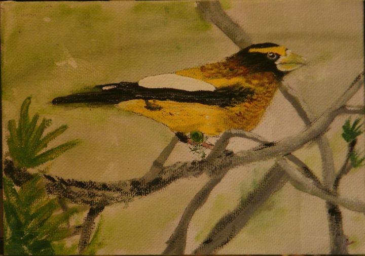 Evening Grossbeak - Brents Art
