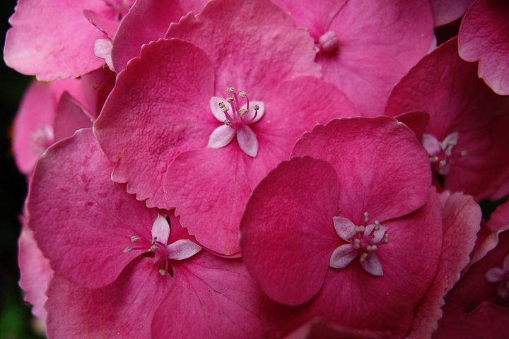 Petals I - Emily Hibbert Photography
