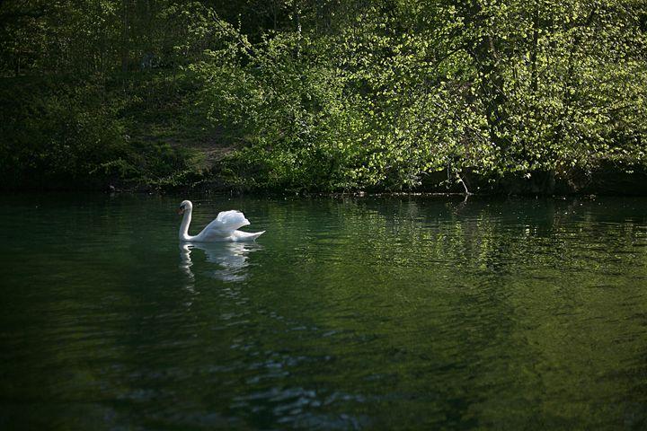 Swan Lake - Emily Hibbert Photography