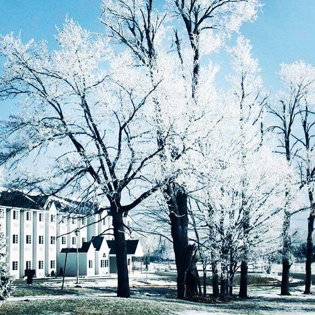 Hoar Frost, Kalamazoo, Michigan - Art by Cassie