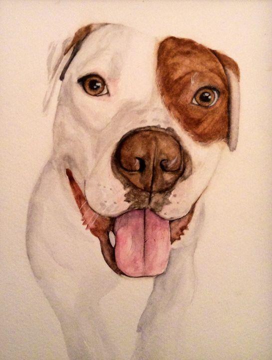 Apollo the Pitbull - Watercolors by Alie