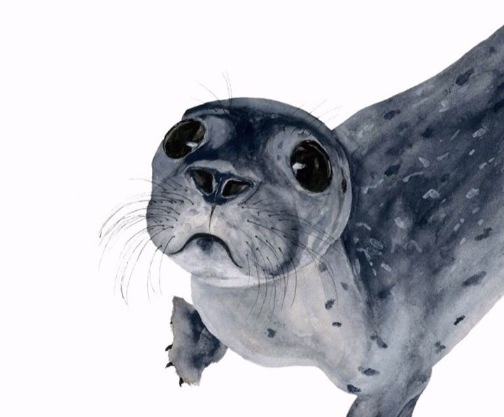 Seal Pup - Watercolors by Alie