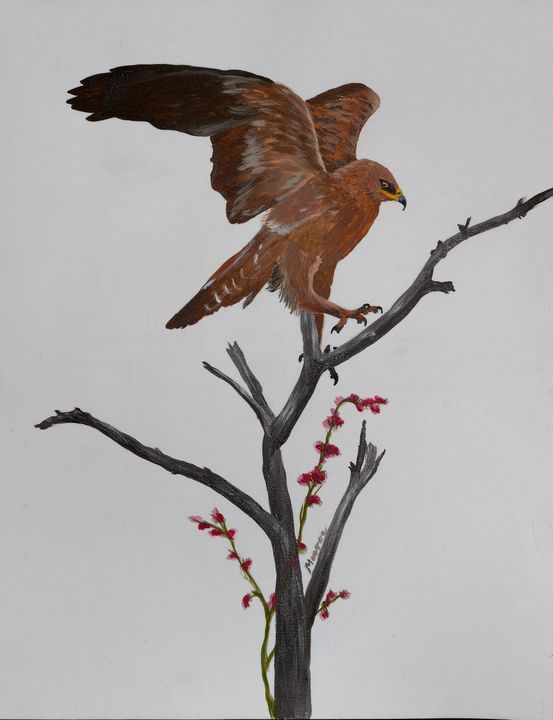The eagle has landed - Maurae