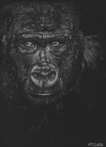 Wild wisdom / Gorilla