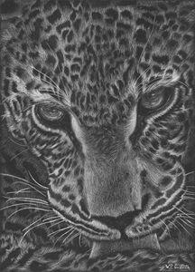 Wild wisdom / Jaguar