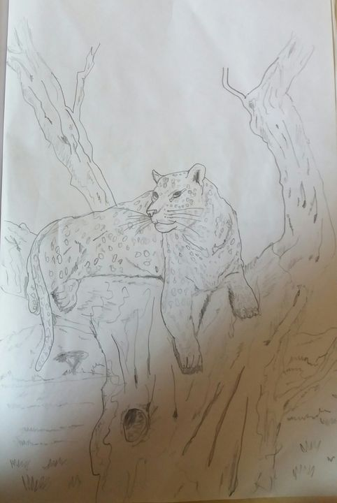 Watching cheetah - Creative arts