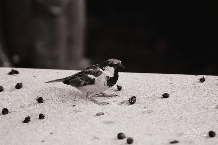 Bird Find_BlackandWhite - Brian Reed II