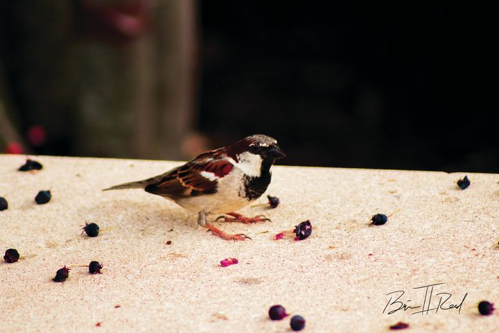 Bird Find Color - Brian Reed II