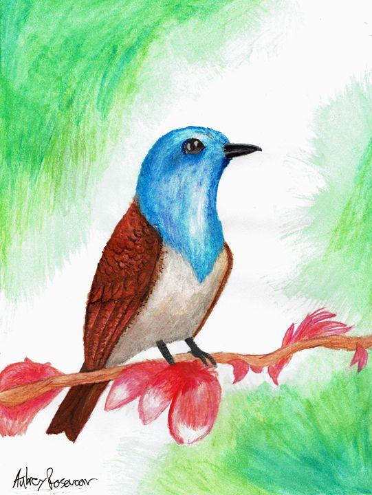 Summer Bird - Aubrey