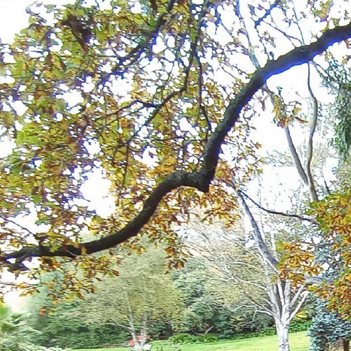 trees k - themistoklis1