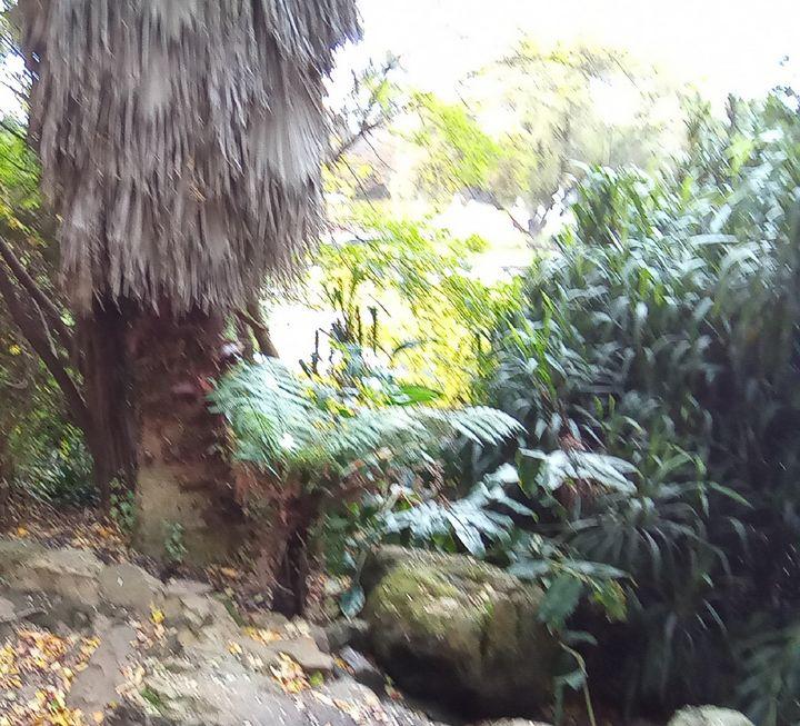 The bush - themistoklis1
