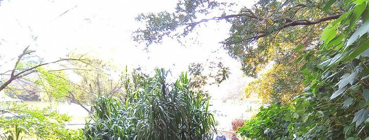 more trees 12 - themistoklis1