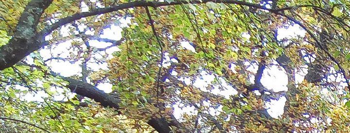 more trees 20 - themistoklis1