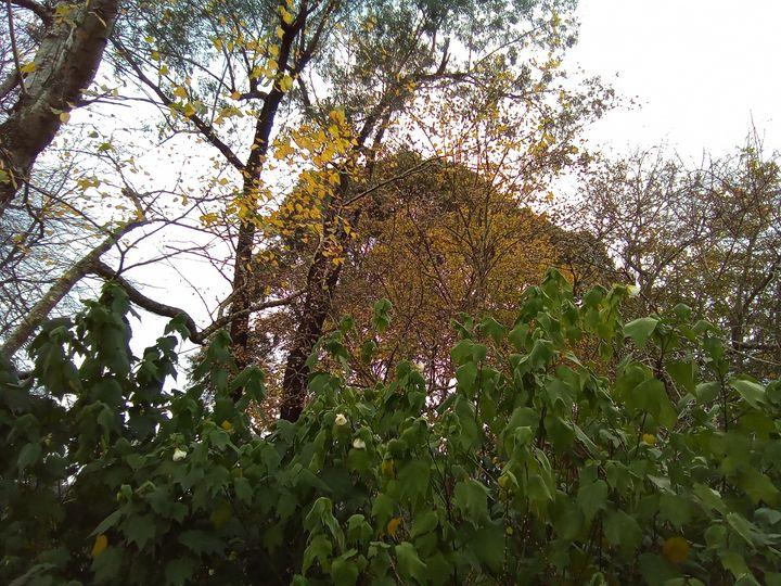 more trees 42 - themistoklis1