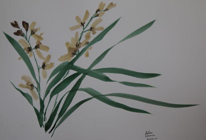 Marsh orchid - VV