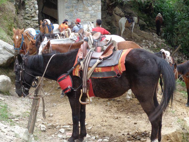 Horses in Galipan village - Jleopold