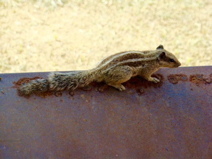 A squirrel at the Taj Mahal - Jleopold