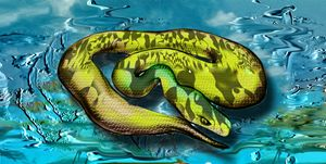 Python Etude