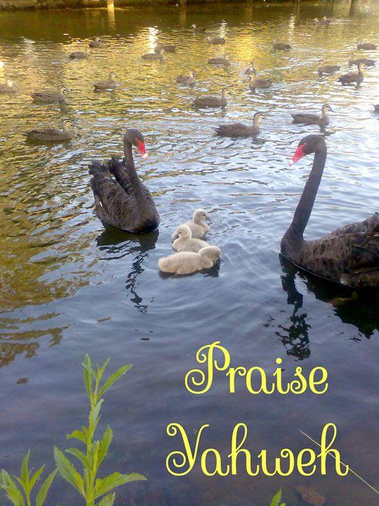 Praise Yahweh - HalleluYAH Art