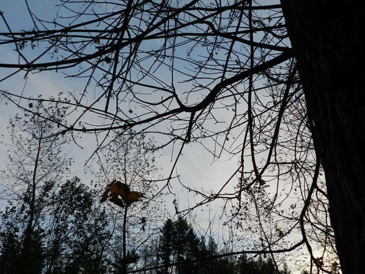 Twilight Autumn Sky - PinealEyeOpens