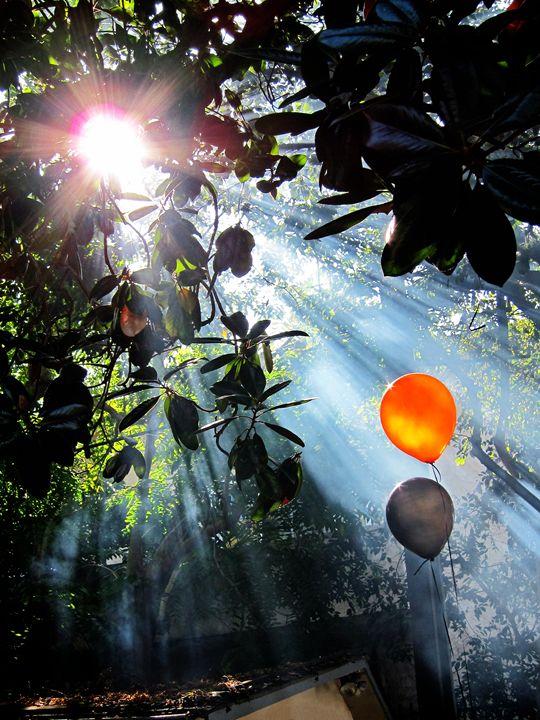 Sunbeams - John Clisset