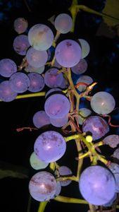 Vine Compilation