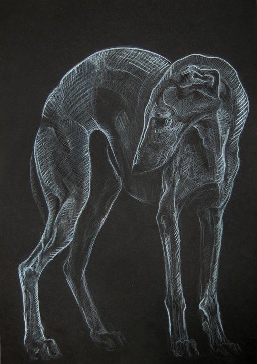 Greyhound - A little bit of my art