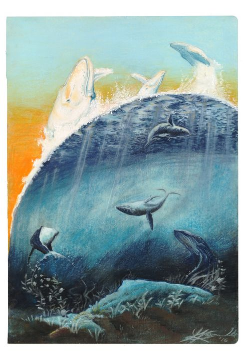 Humpback Whale - Gilles Rainville Illustration