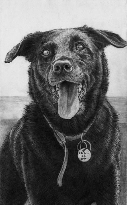 Lucy, Black Dog. - Vortiko_FineArt