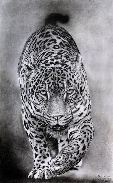 Jaguar_yaguarete - Vortiko_FineArt