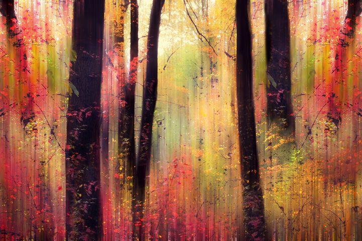 Forest Frolic - Jessica Jenney Photography