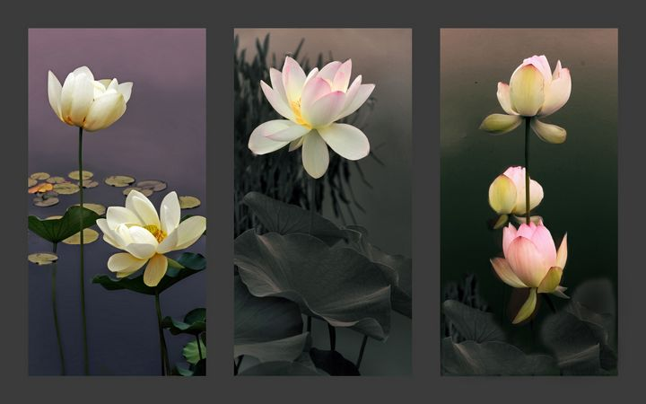 Lotus Collection 2 - Jessica Jenney Photography