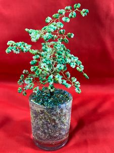 Young sapling in a glass Bonsai tree
