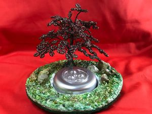 Acer, Japanese maple tree bonsai