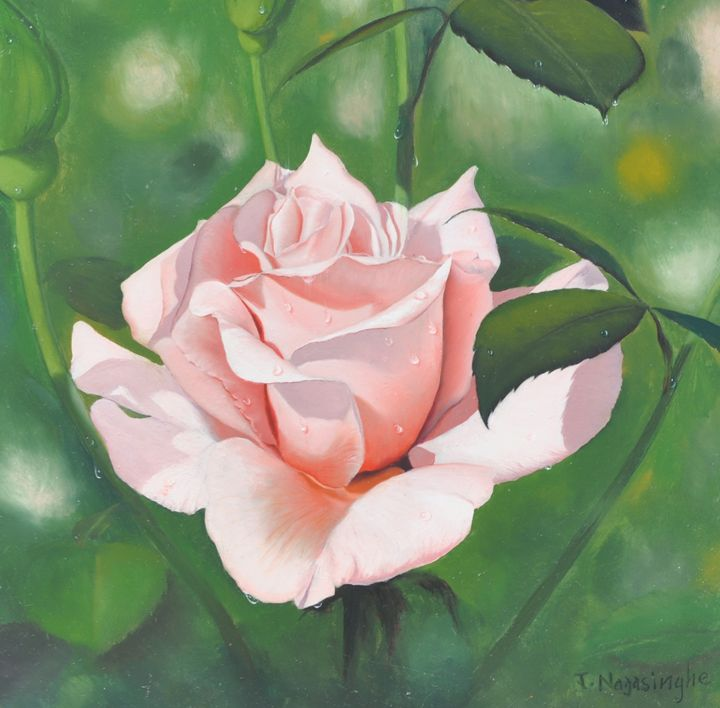 Pink Rose - Painted by Jayantha Nagasinghe