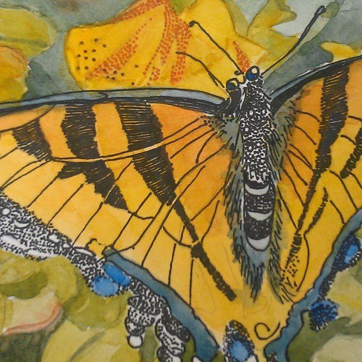 Butterfly Closeup - Anita Bischoff