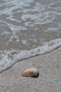 Seaside Shell