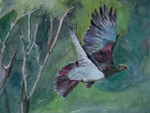 NZ native Wood pigeon in flight - Jillian Bryan