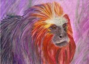 Blazing Lion Tamarin