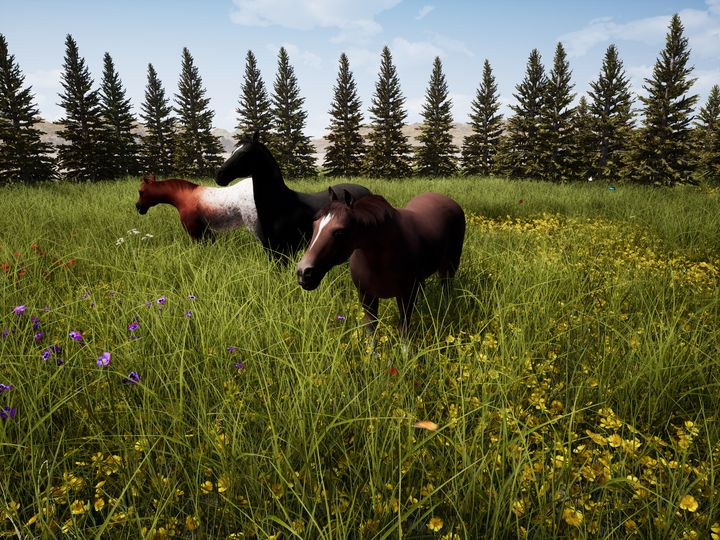 Horses In A Meadow - NeworImage