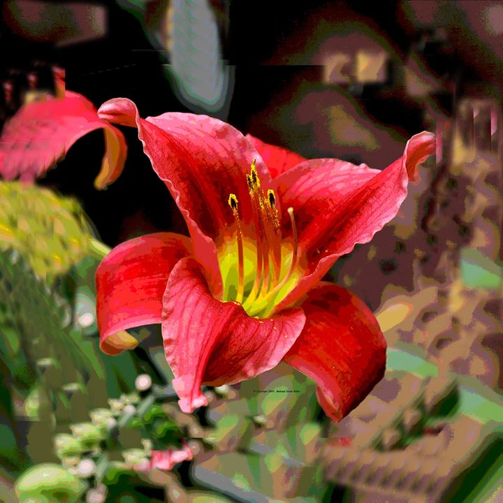 Red Lily - mistermike photography