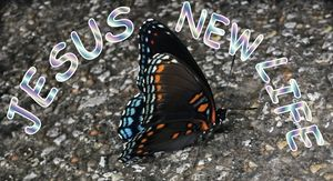 Jesus New Life - Jesus Marketing & Country