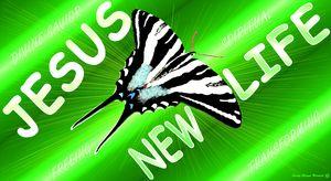 Jesus New Life ZebraButterflySublime