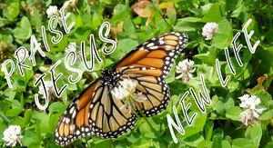 Praise Jesus New Life  w/ Monarch