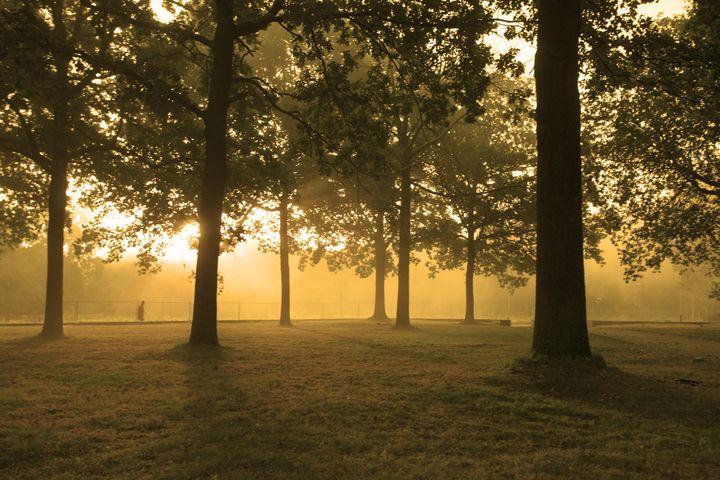 Morning light - Druth